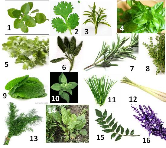 indian medicinal plants and their uses with pictures pdf